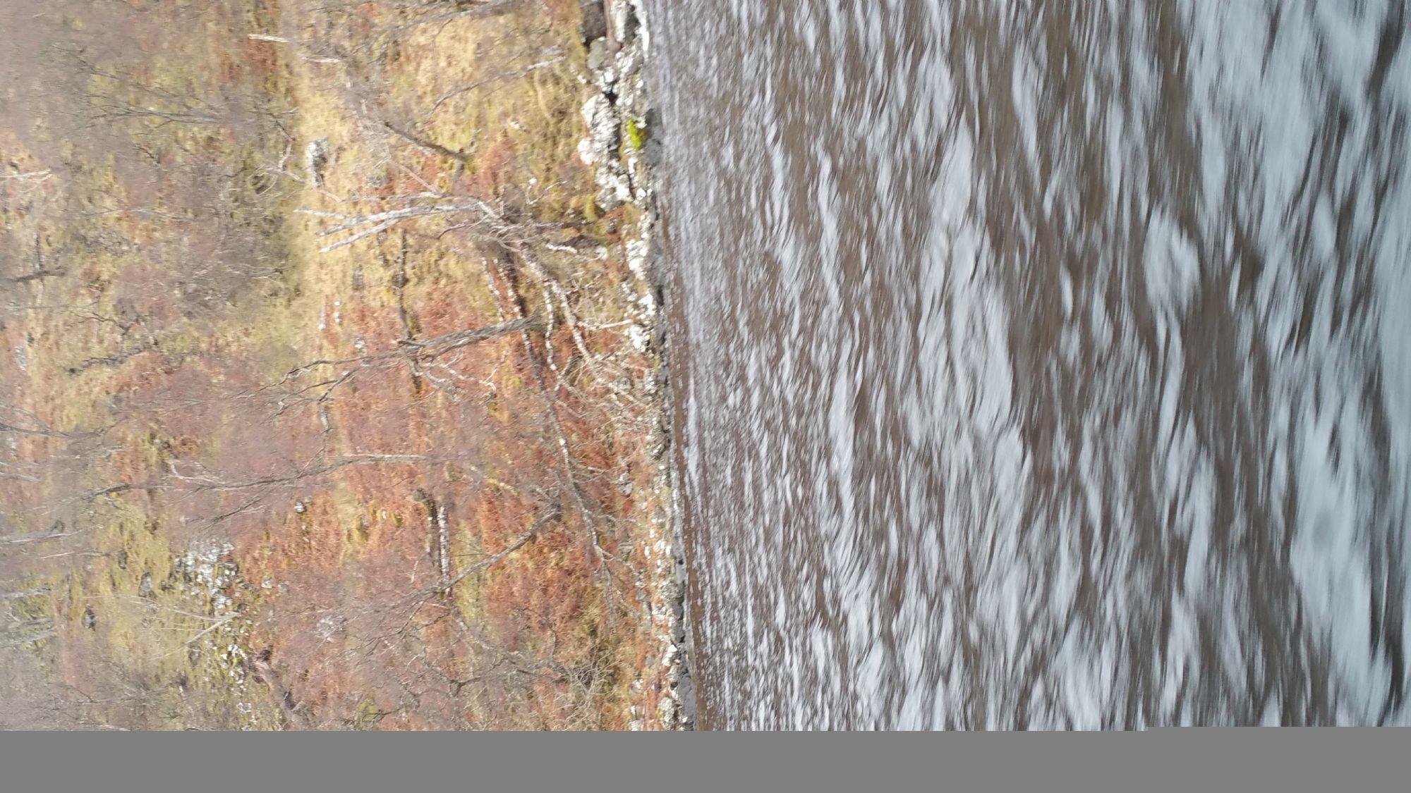 Loch Ness : the bank