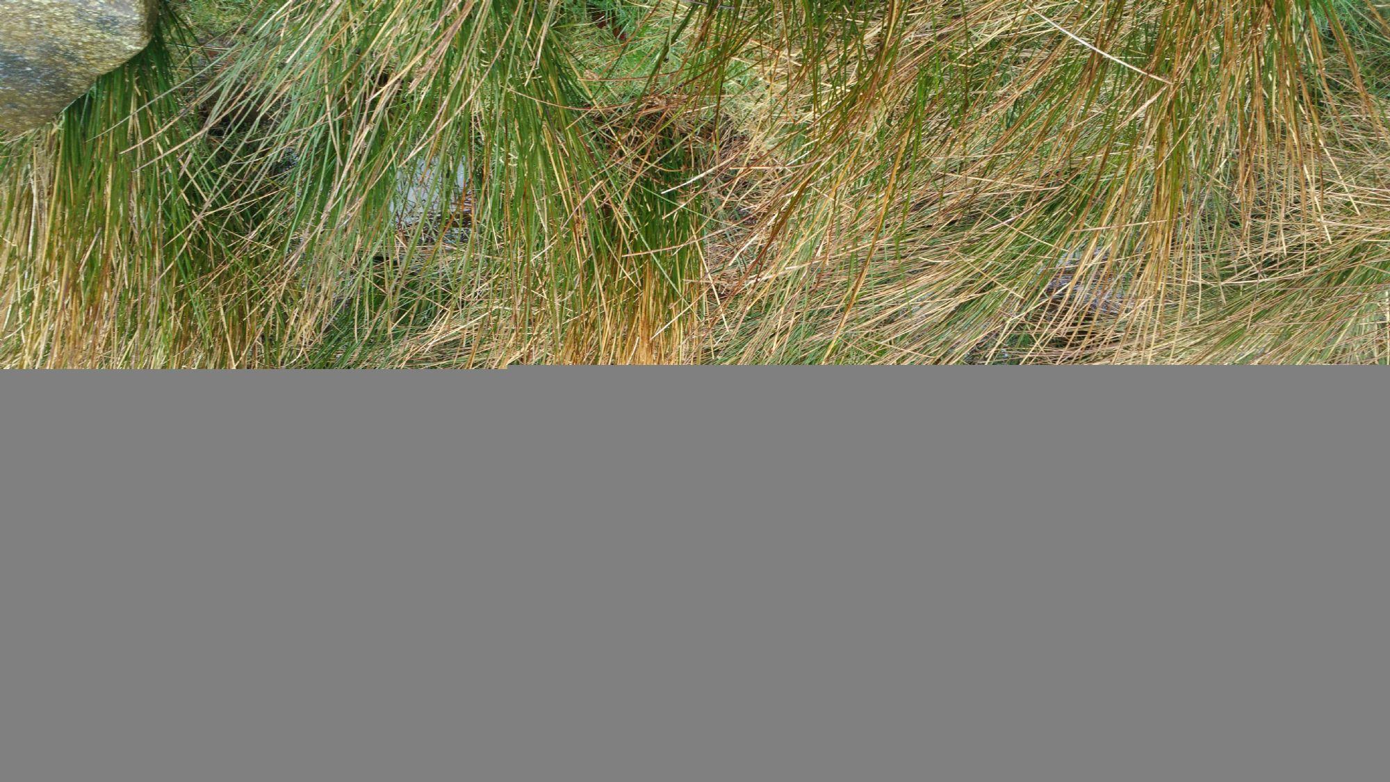 Grass.....