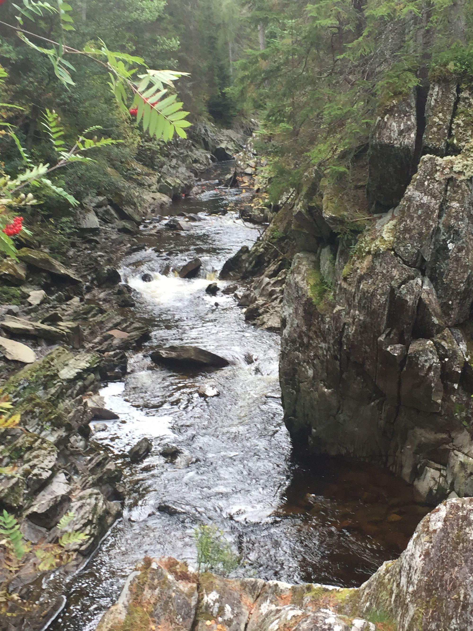 Perfect Scottish woodland