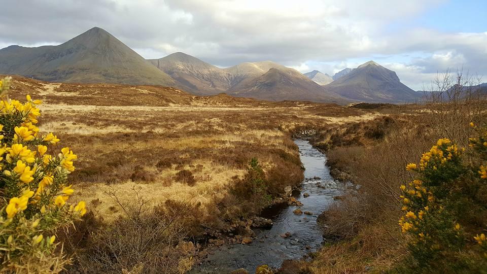 Highland of Scotland 5