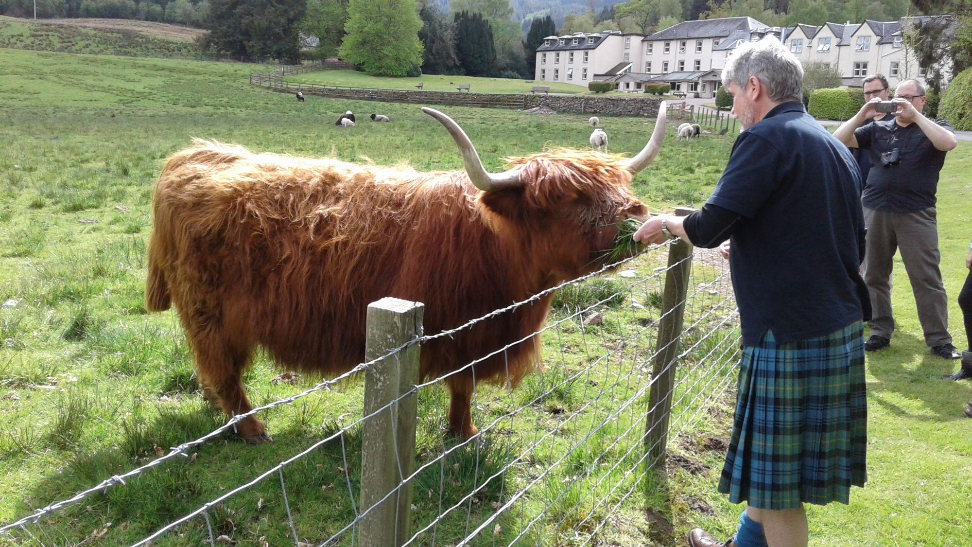 Sean and a good Highland Cow
