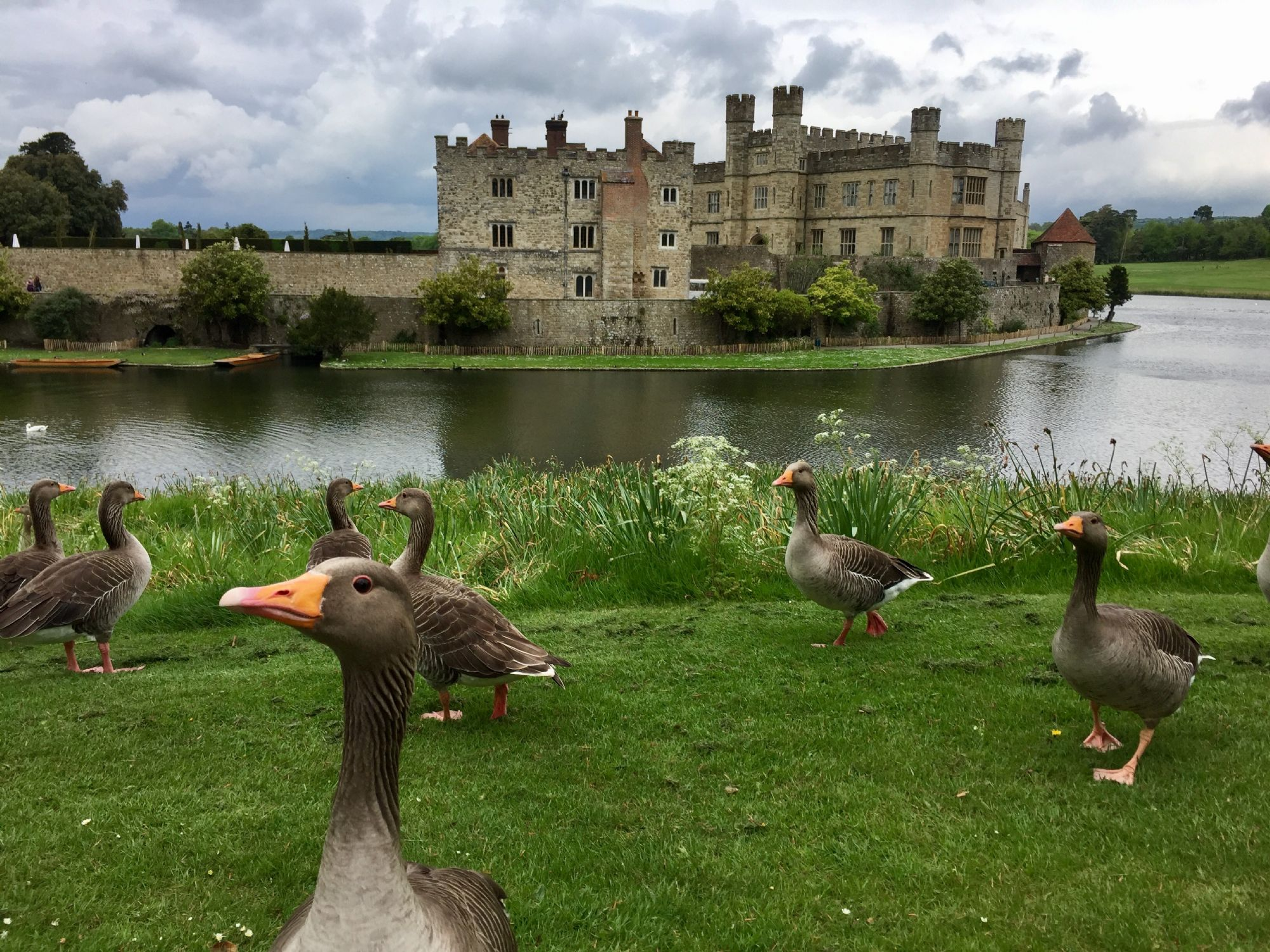 Leeds Castle with Geese