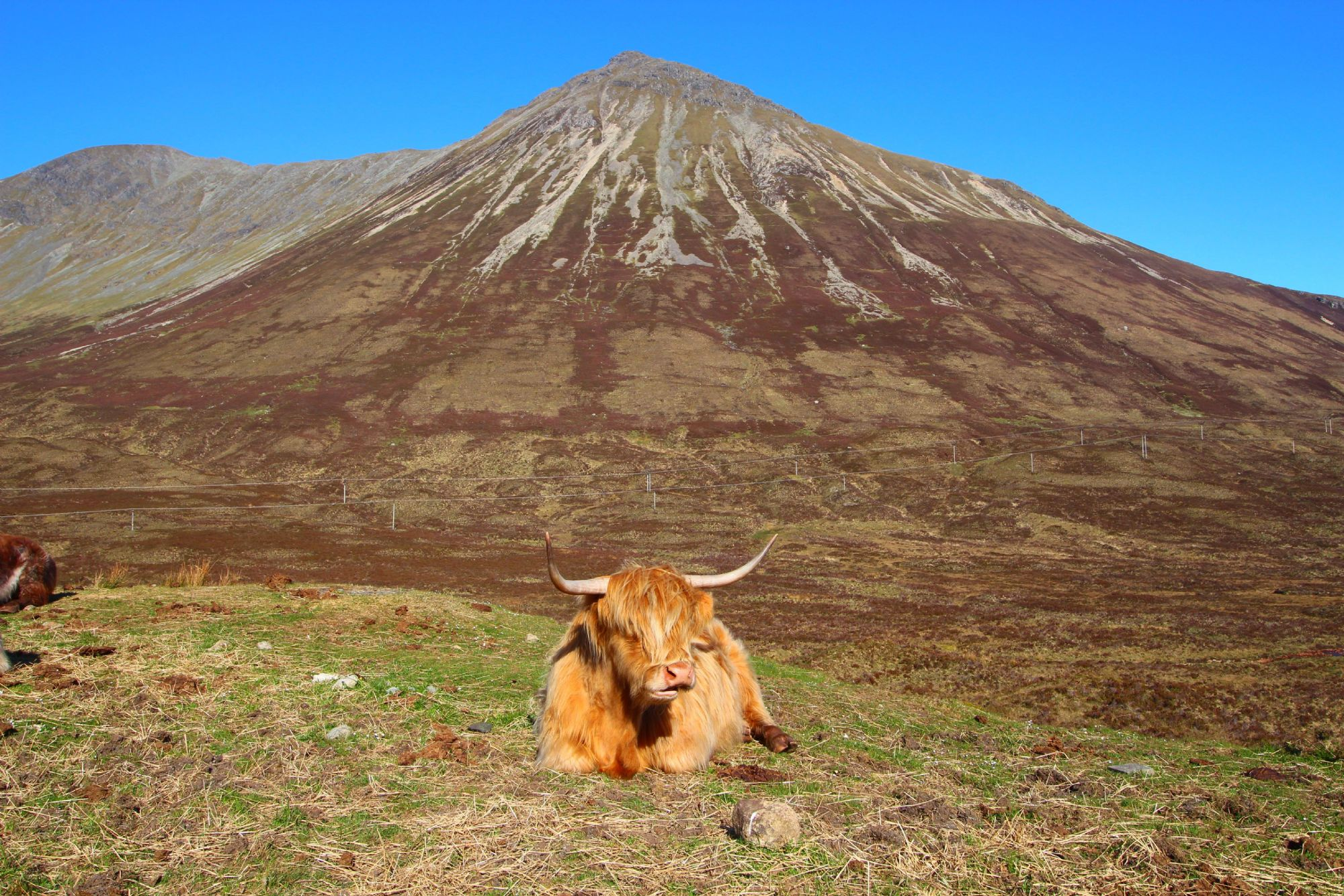 Highlands and Red Cow