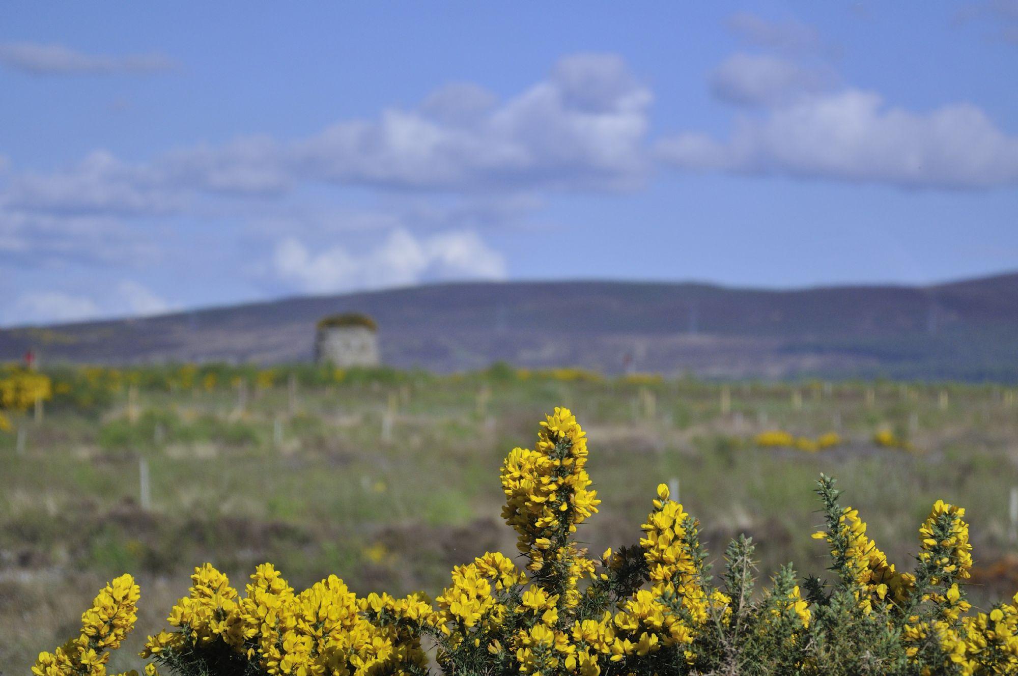 Farm near Inverness