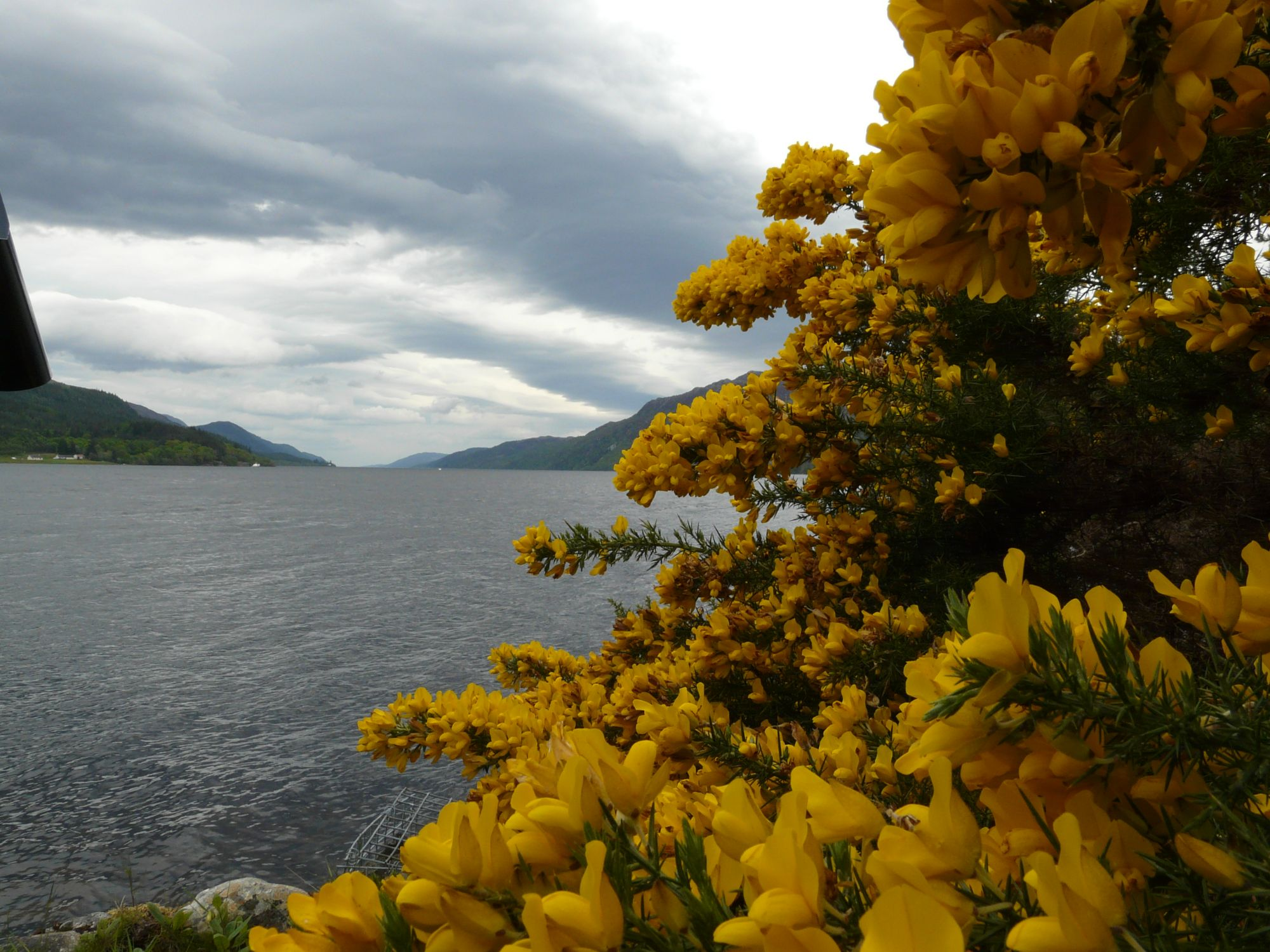Flowers for Nessie