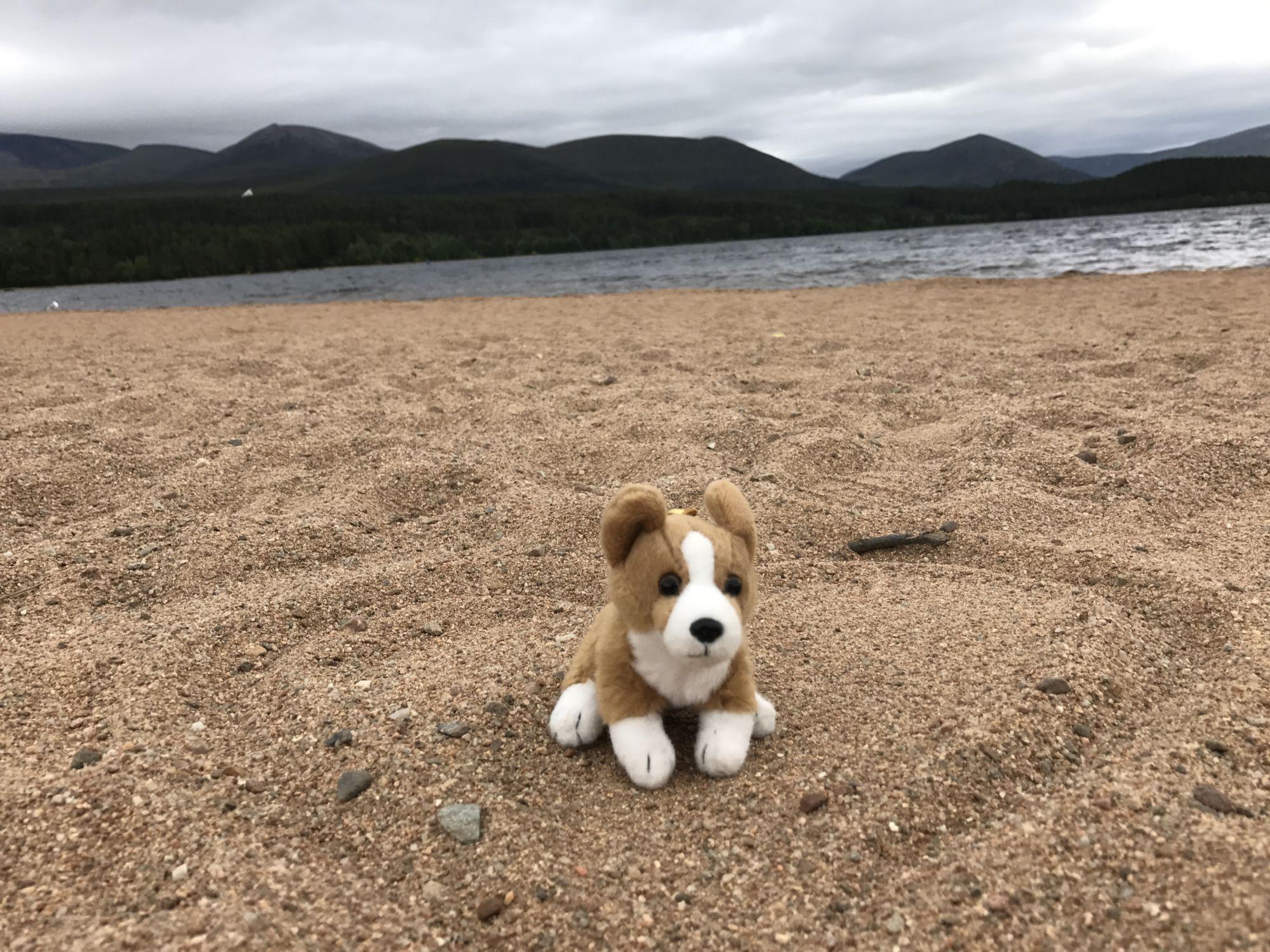 Sir Corgums at Loch Morlich