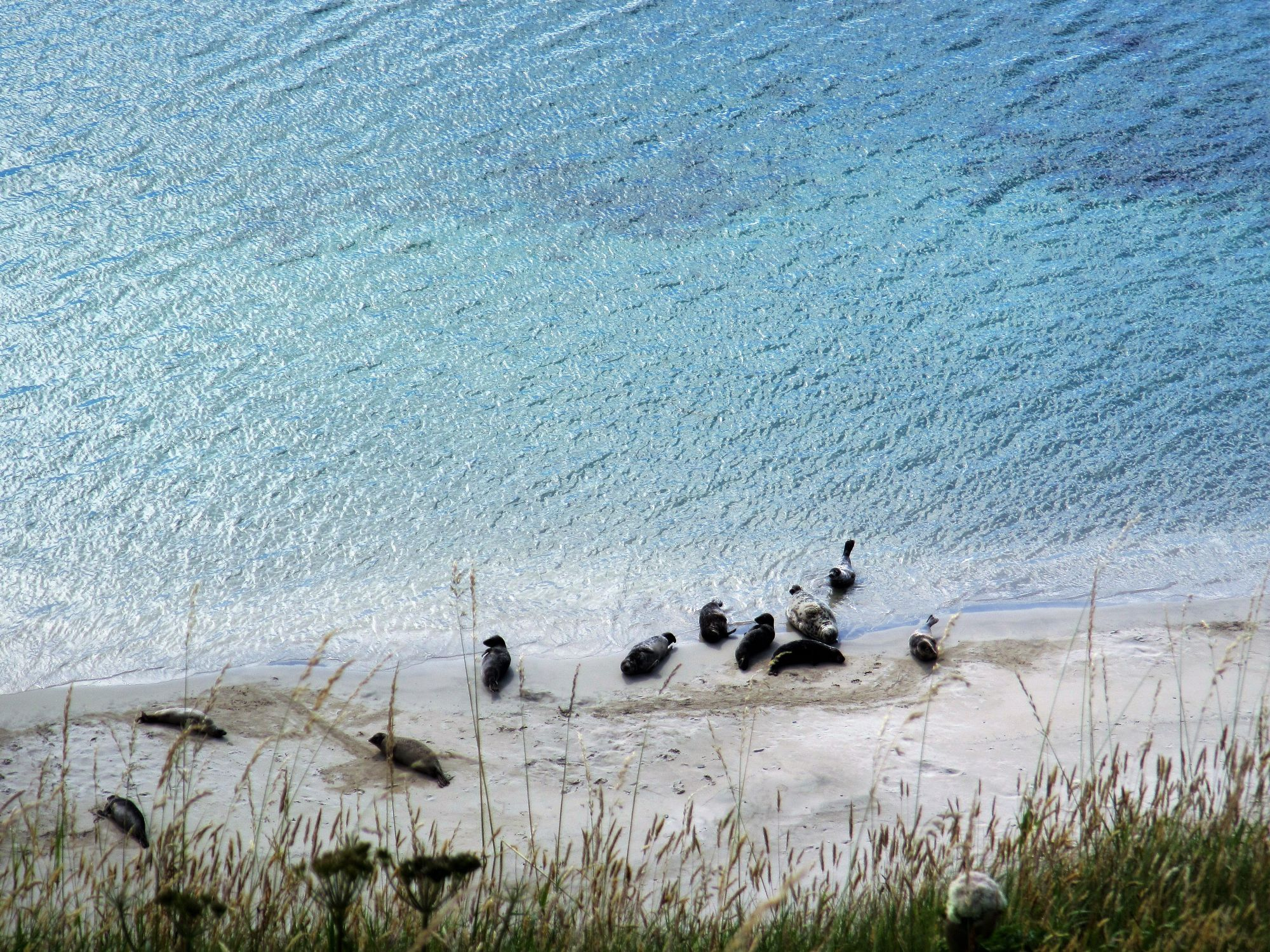 Speggie Beach seals