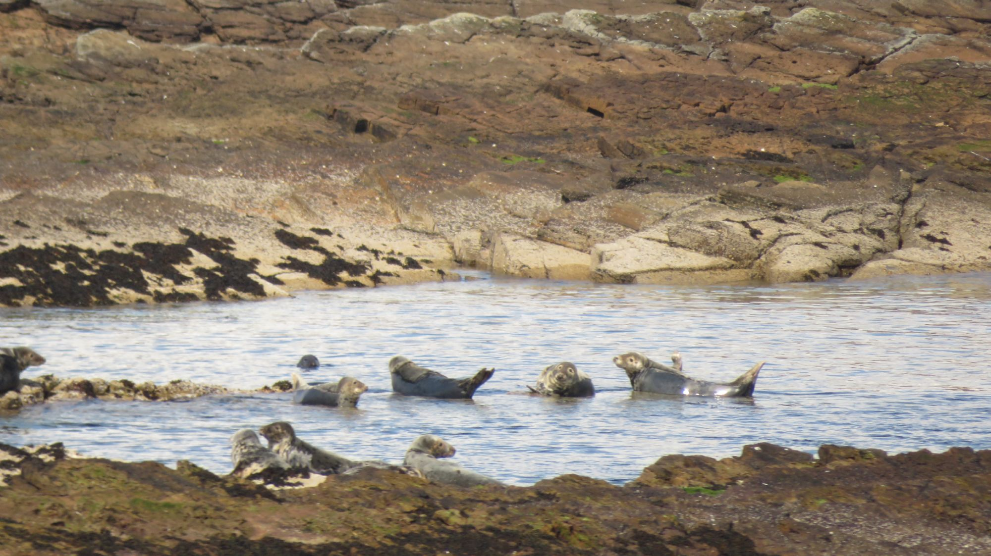 Seals from the ferry