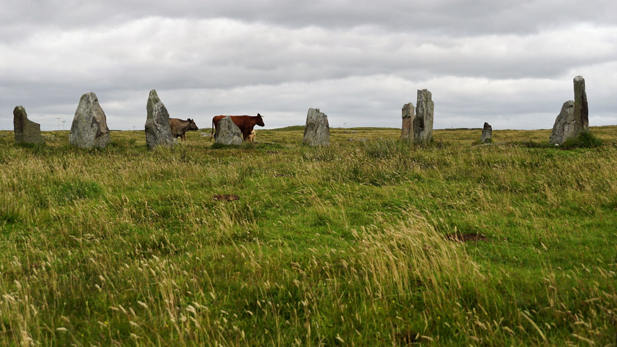 Cows and stones