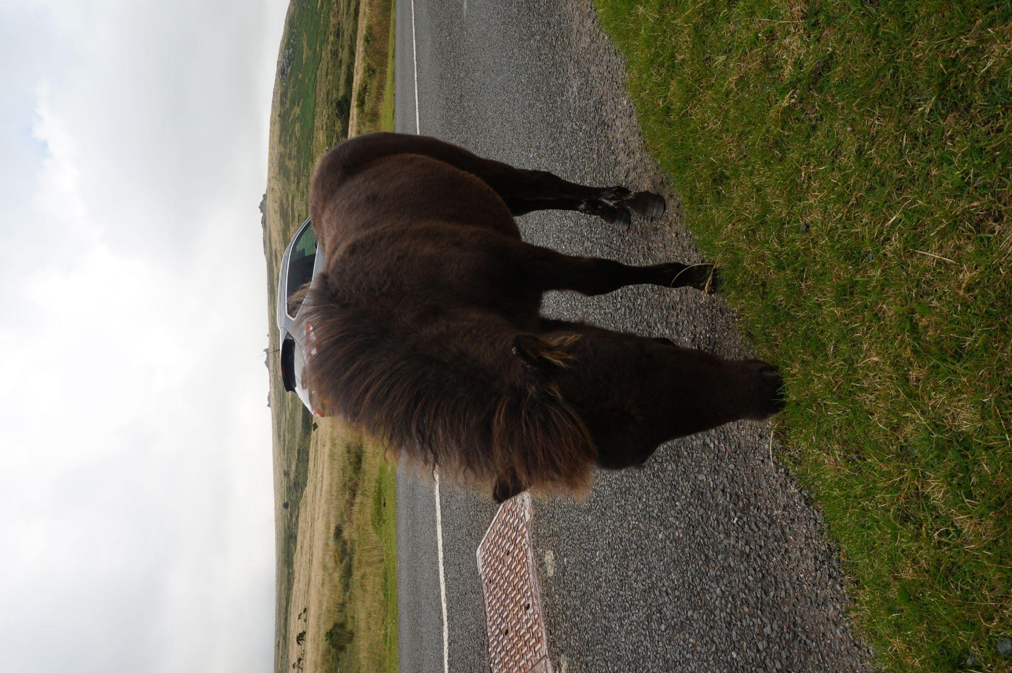 One more pony
