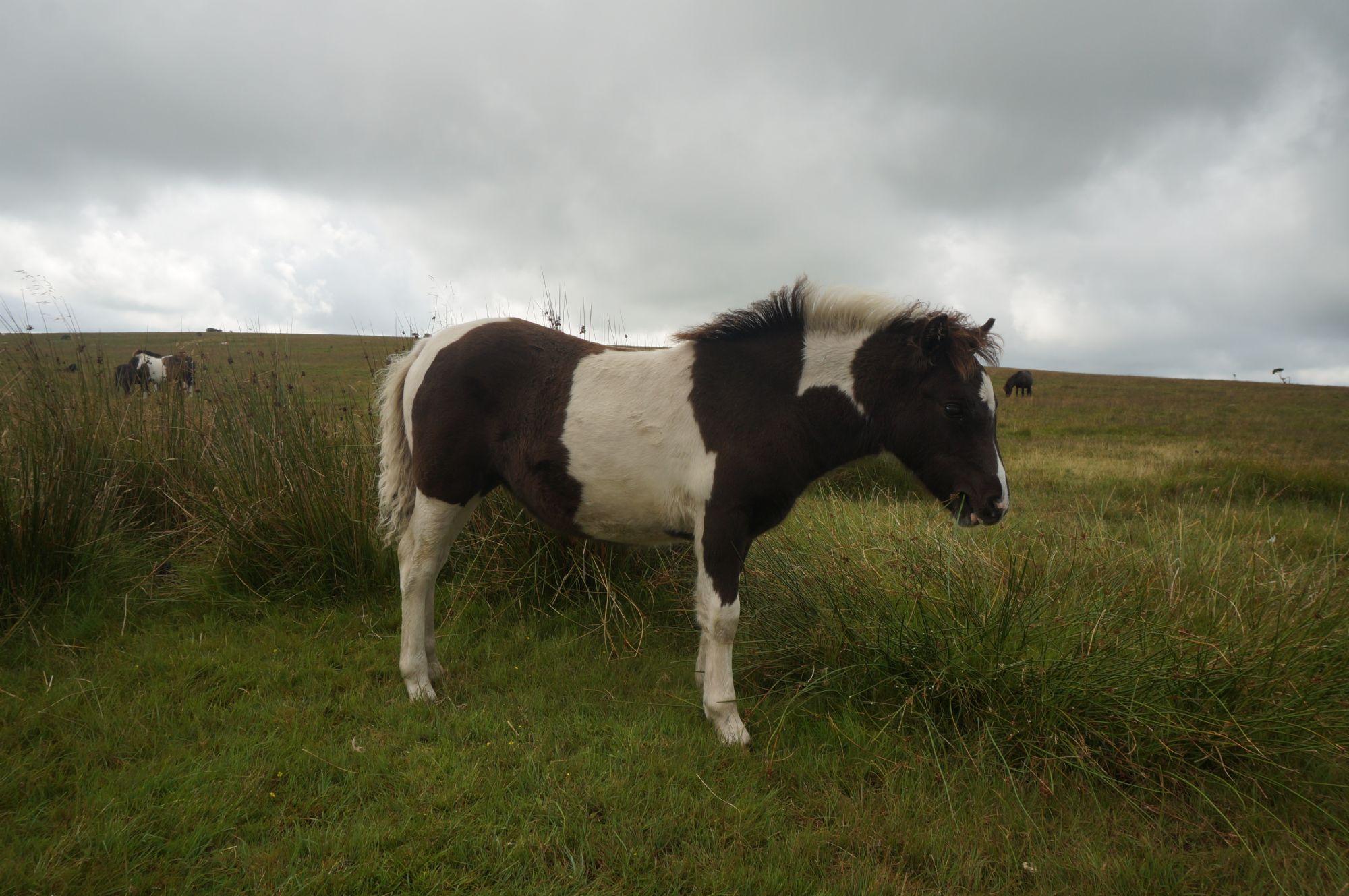 Pony again