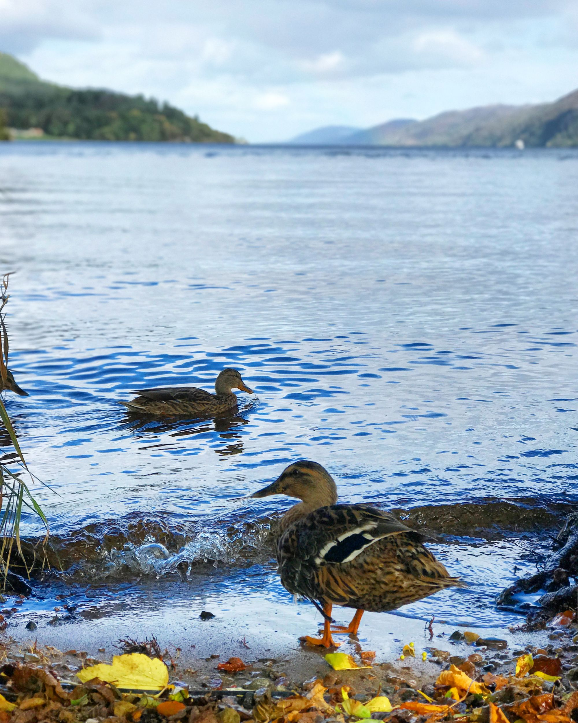 Lochness with the Duckies! 128522
