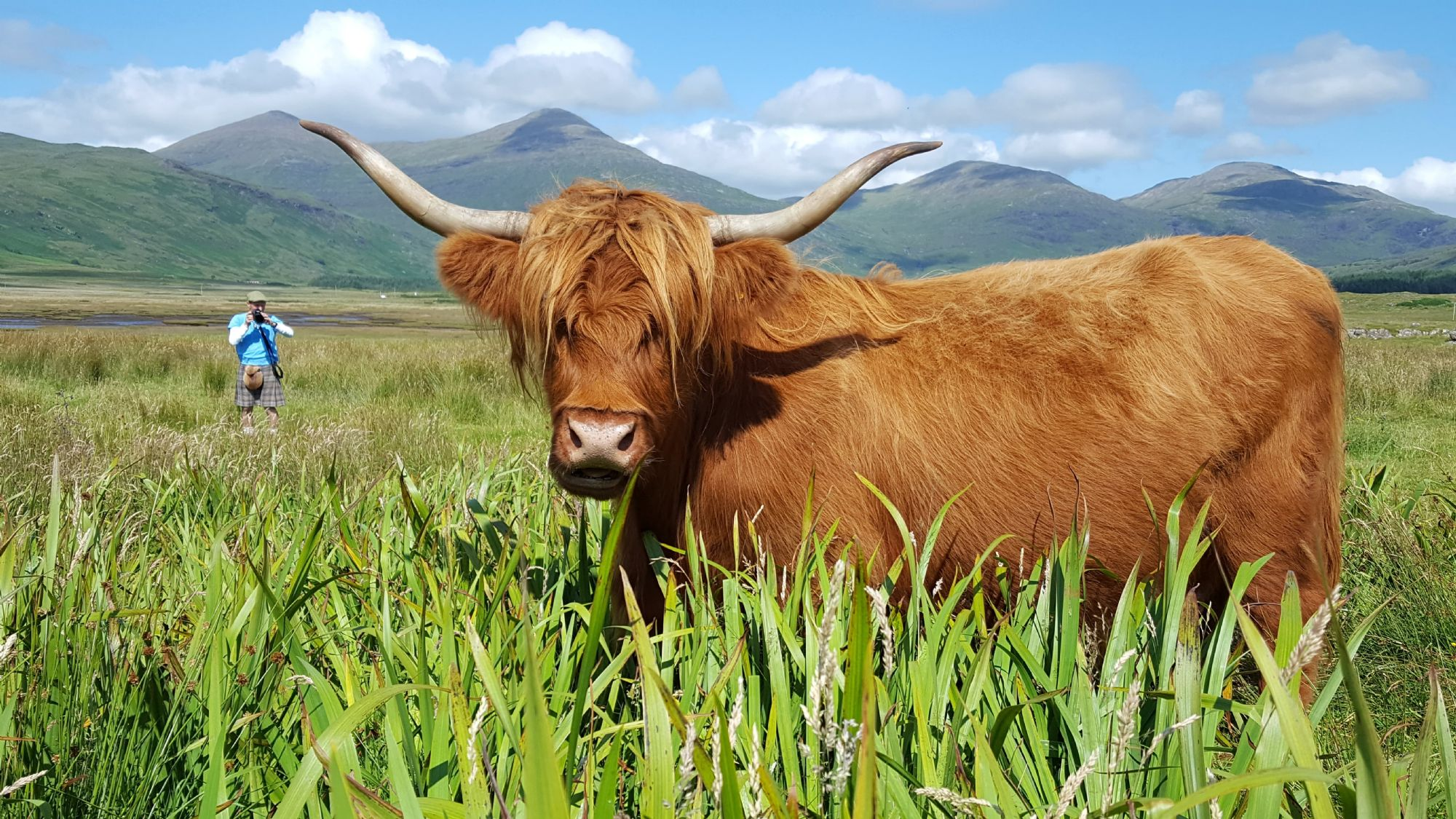 Hairy Coo and a wee fairie man