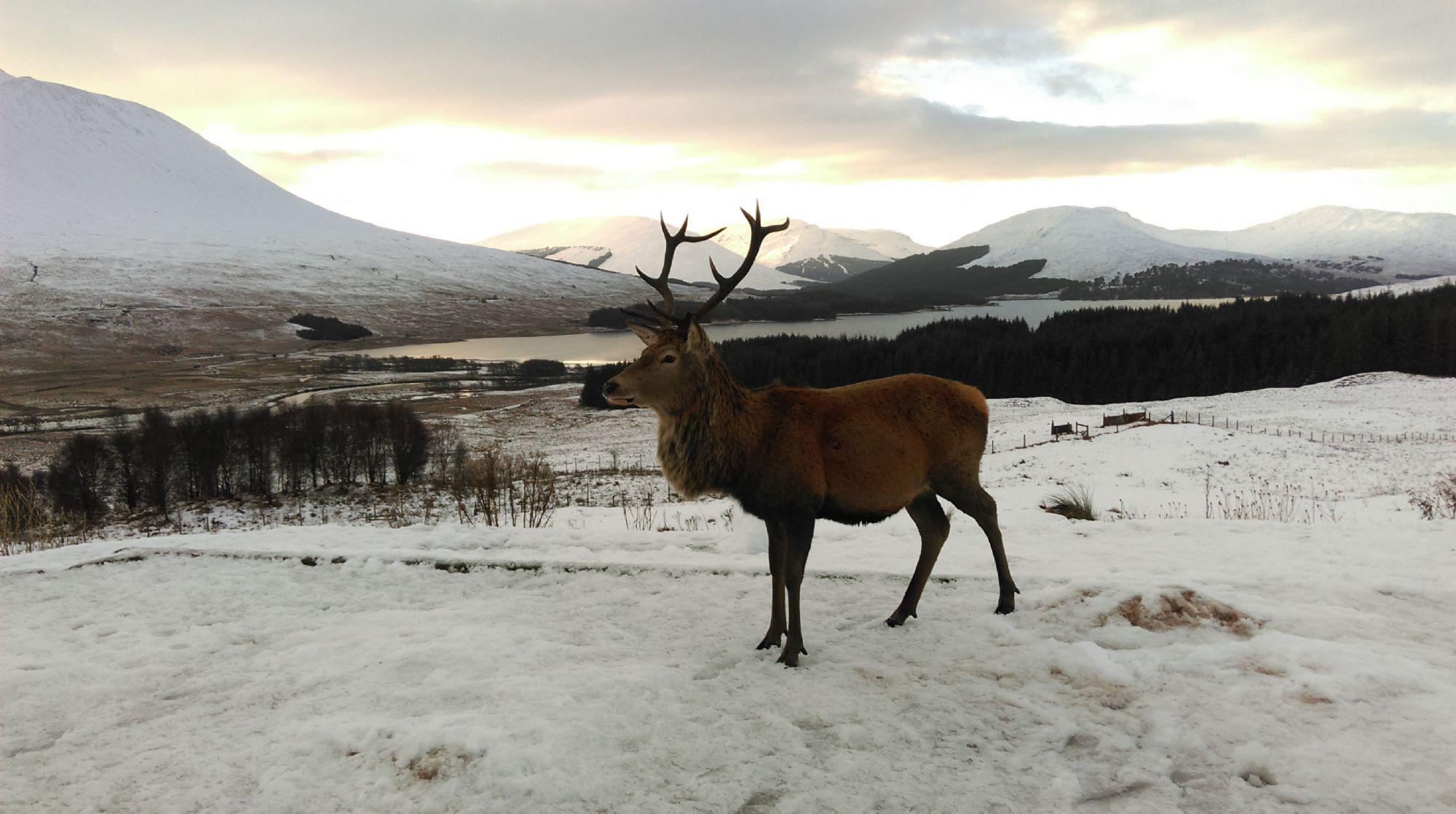 Winter at Loch Tulla