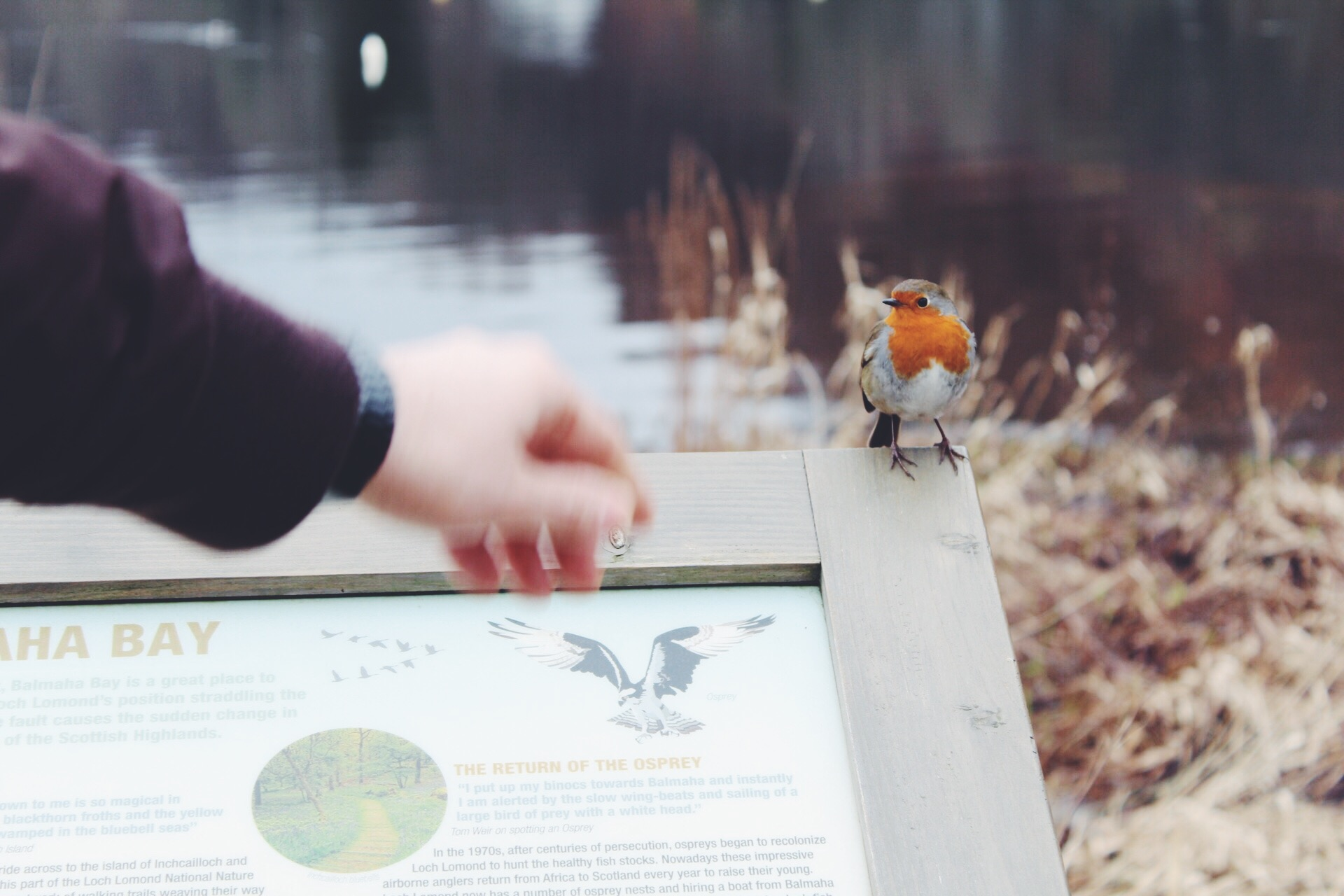 hey there little robin