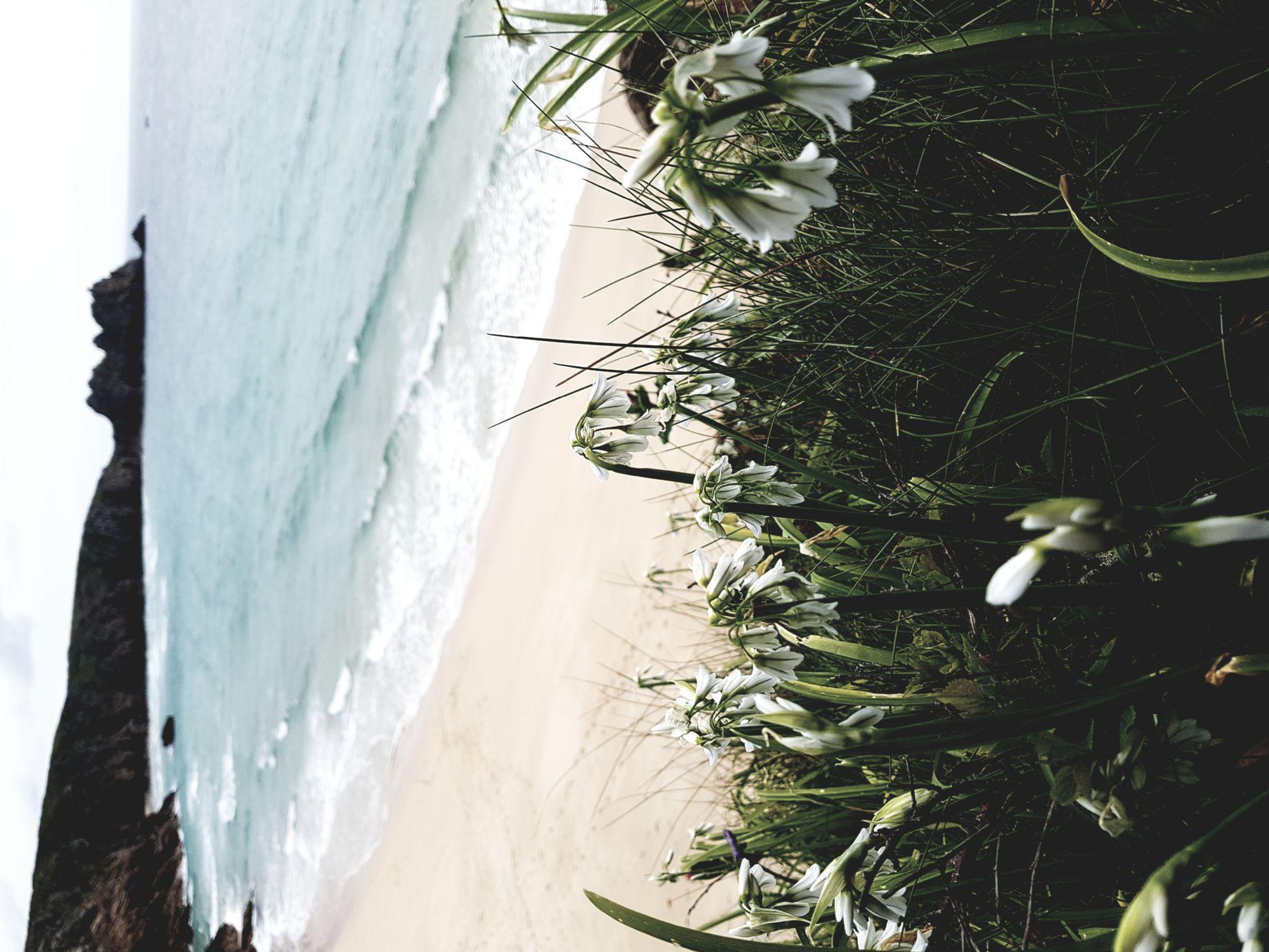 Emerald sea on sandy beach...p