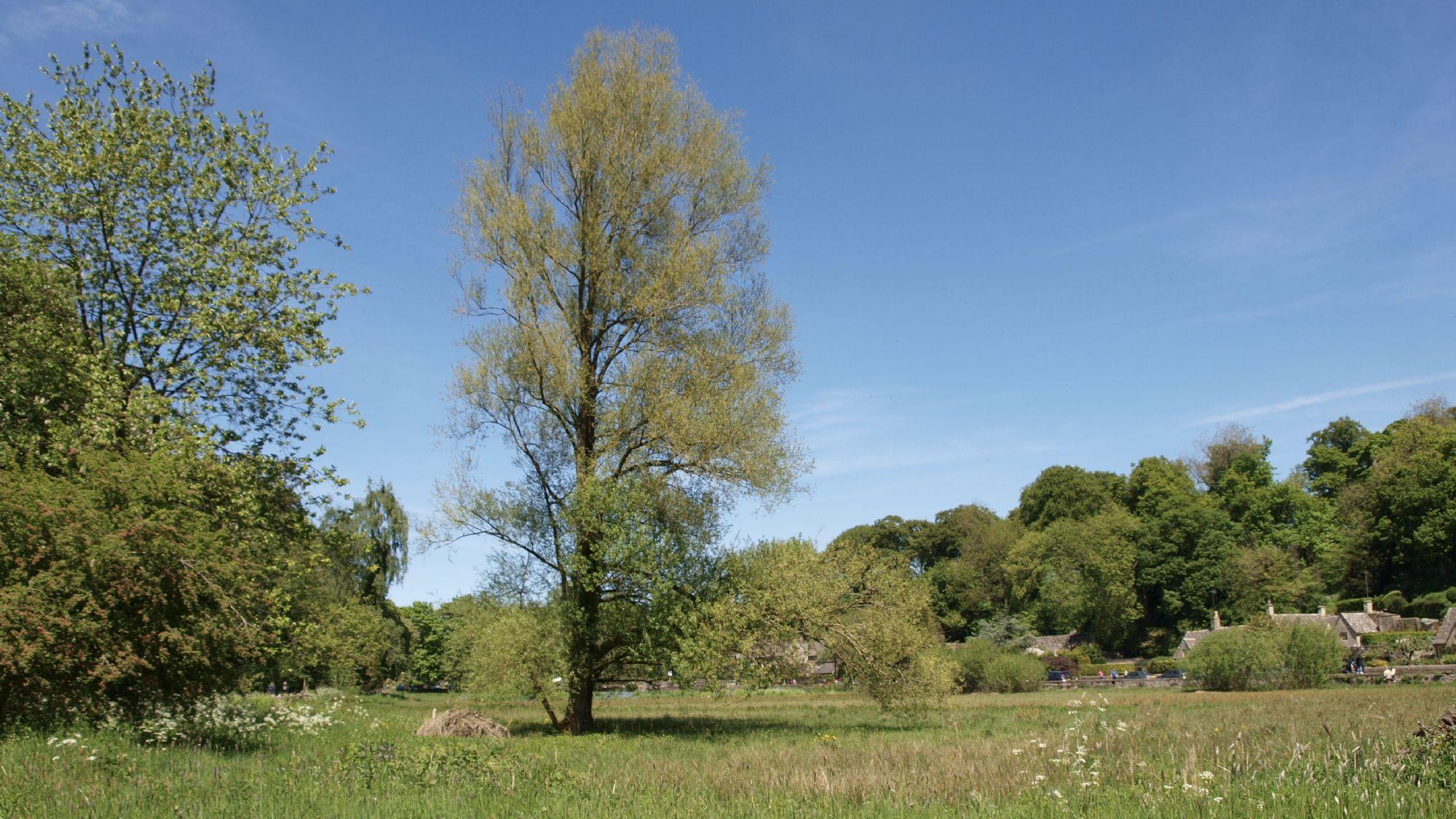 Bibury Meadow
