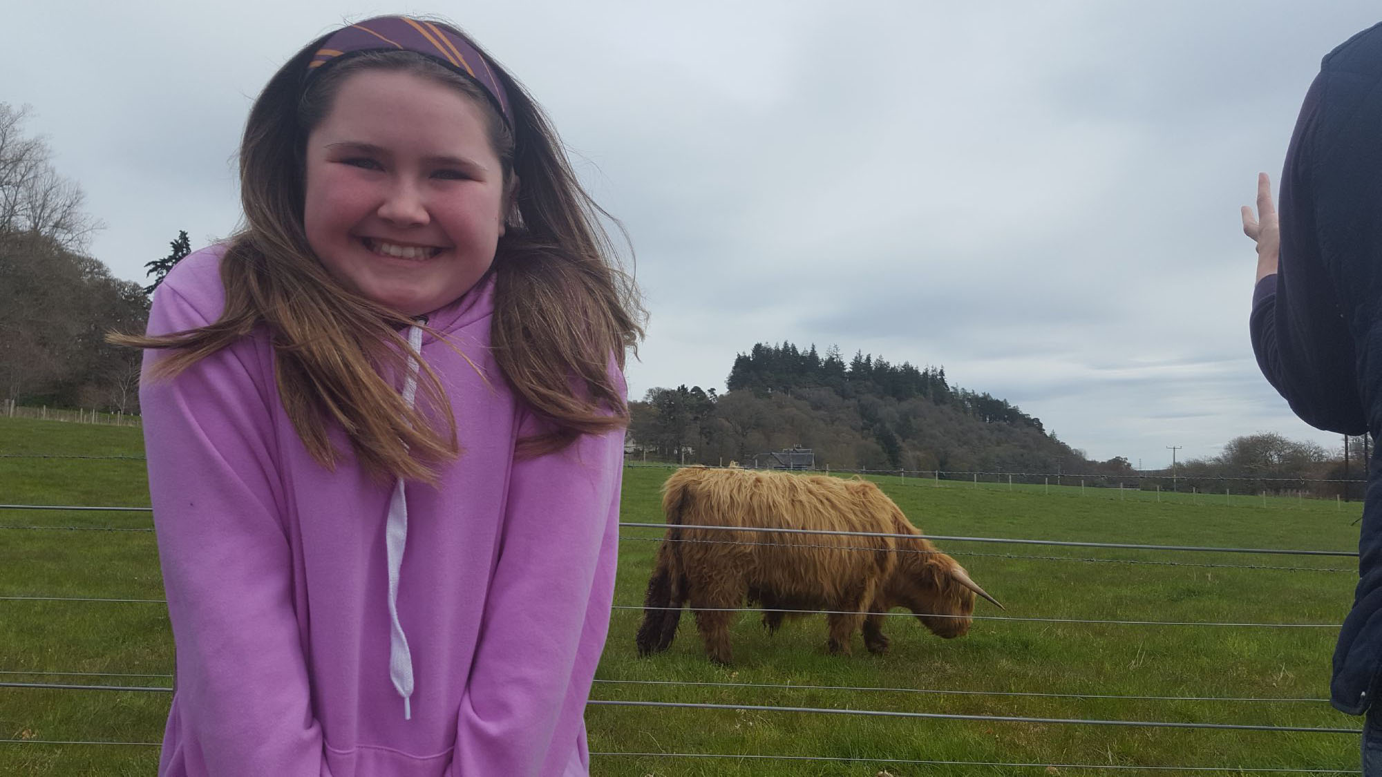 More Highland Coo love