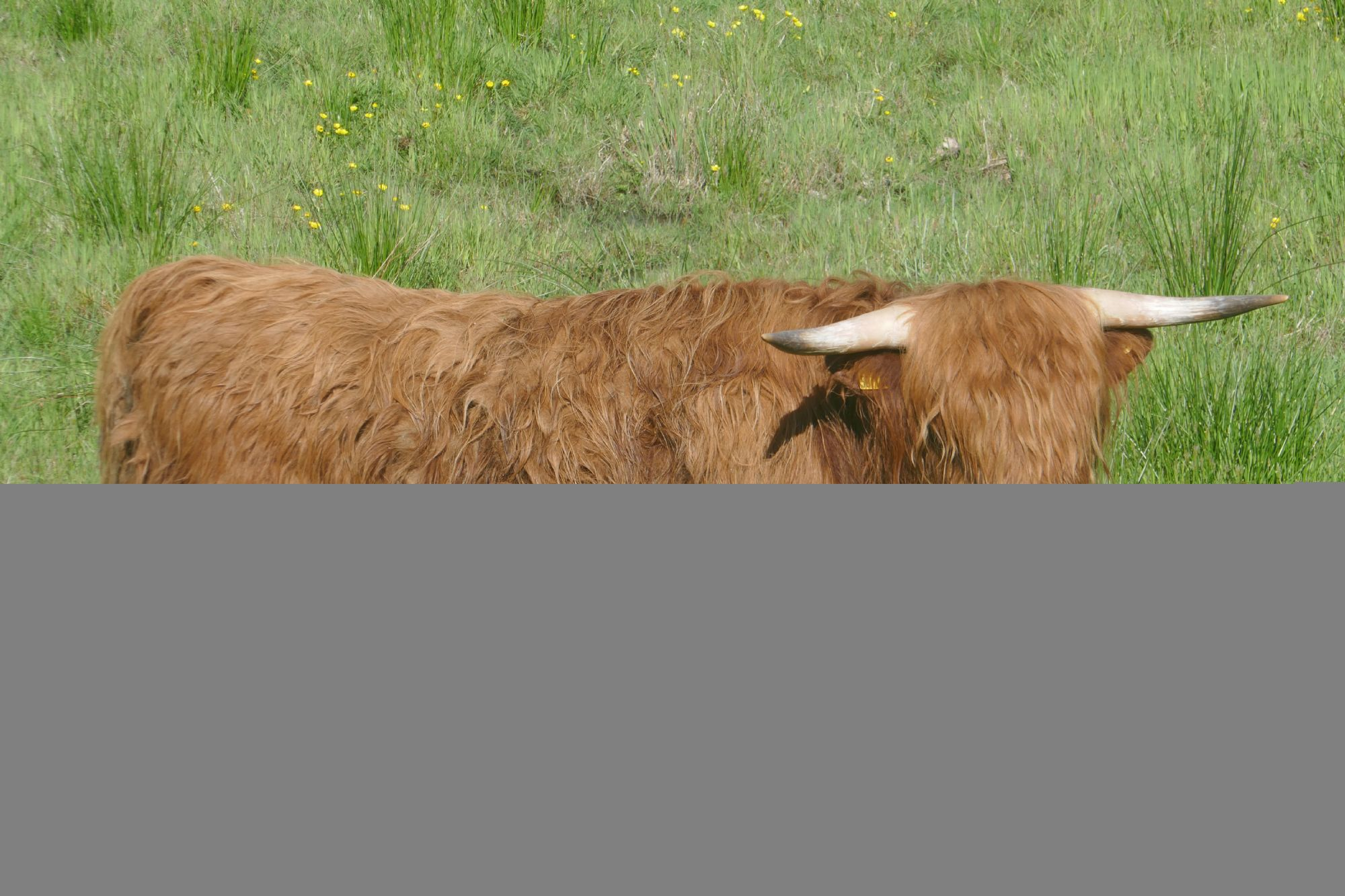 Highlands Moo