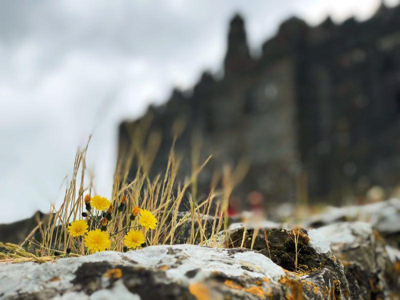 abbey of cashel