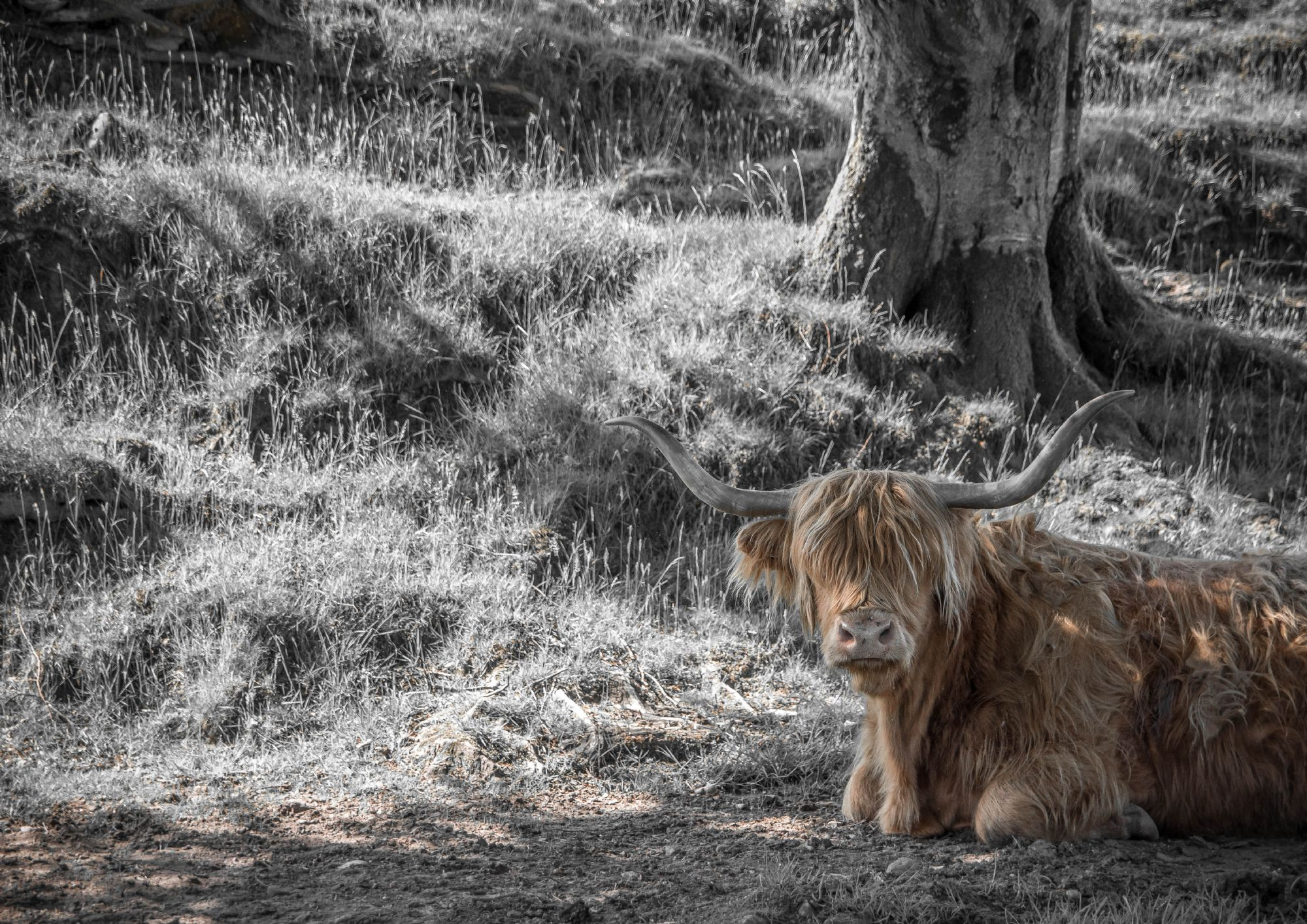 A nice Coo in the nature