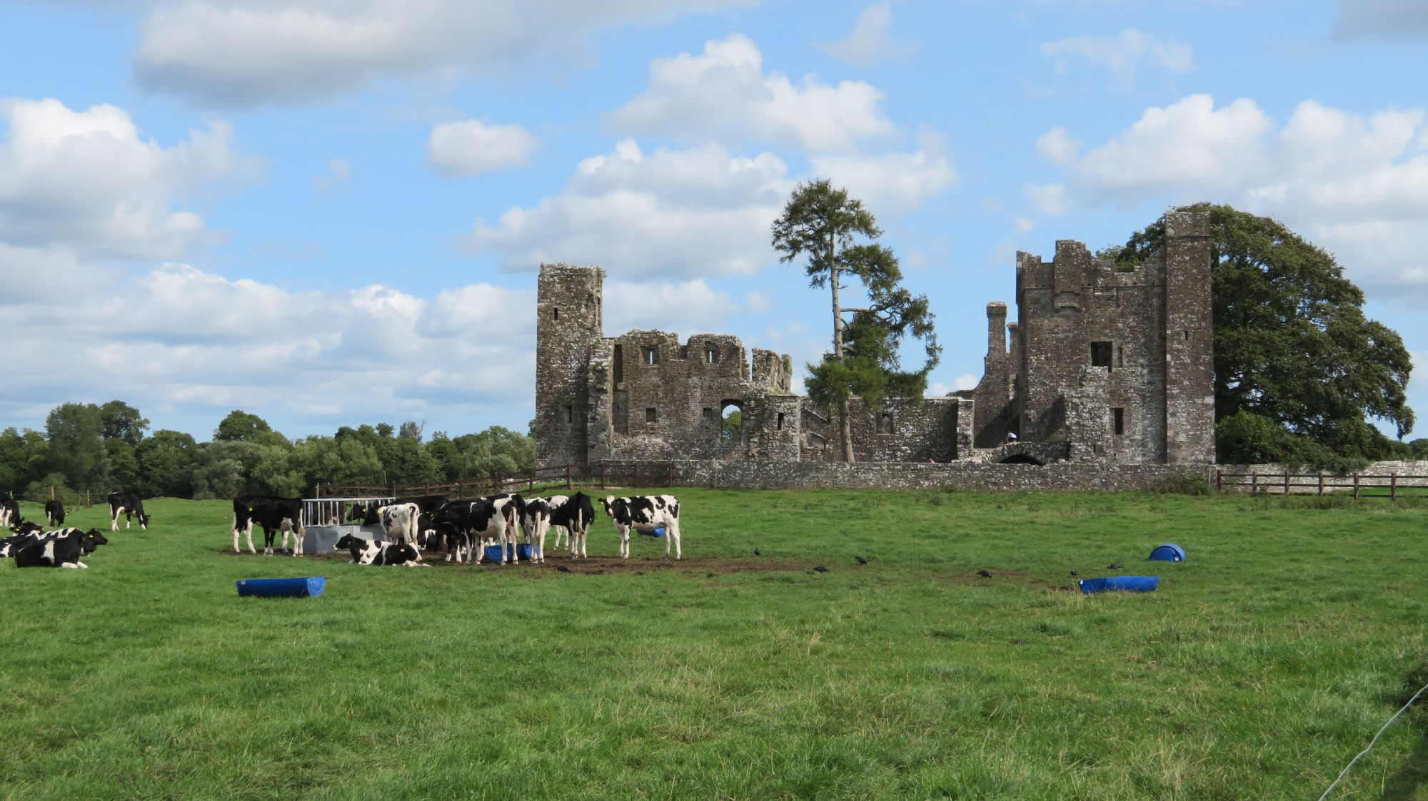 Bective Abbey.
