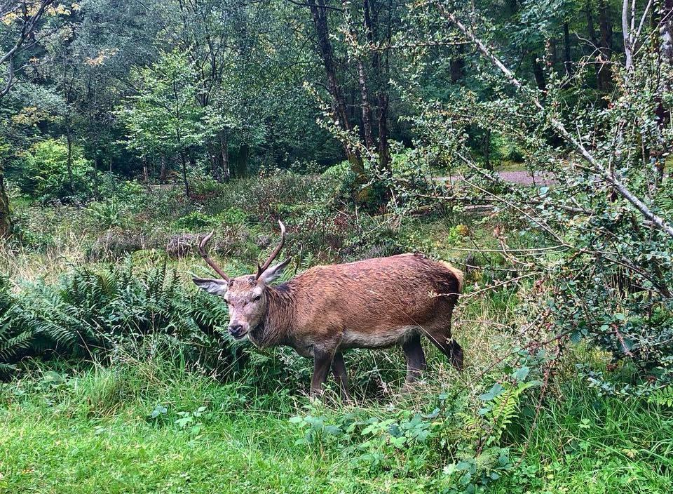Close-up deer sighting