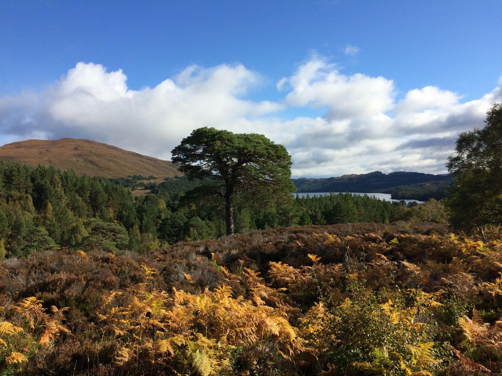 Caledonian Forest Glen Affric
