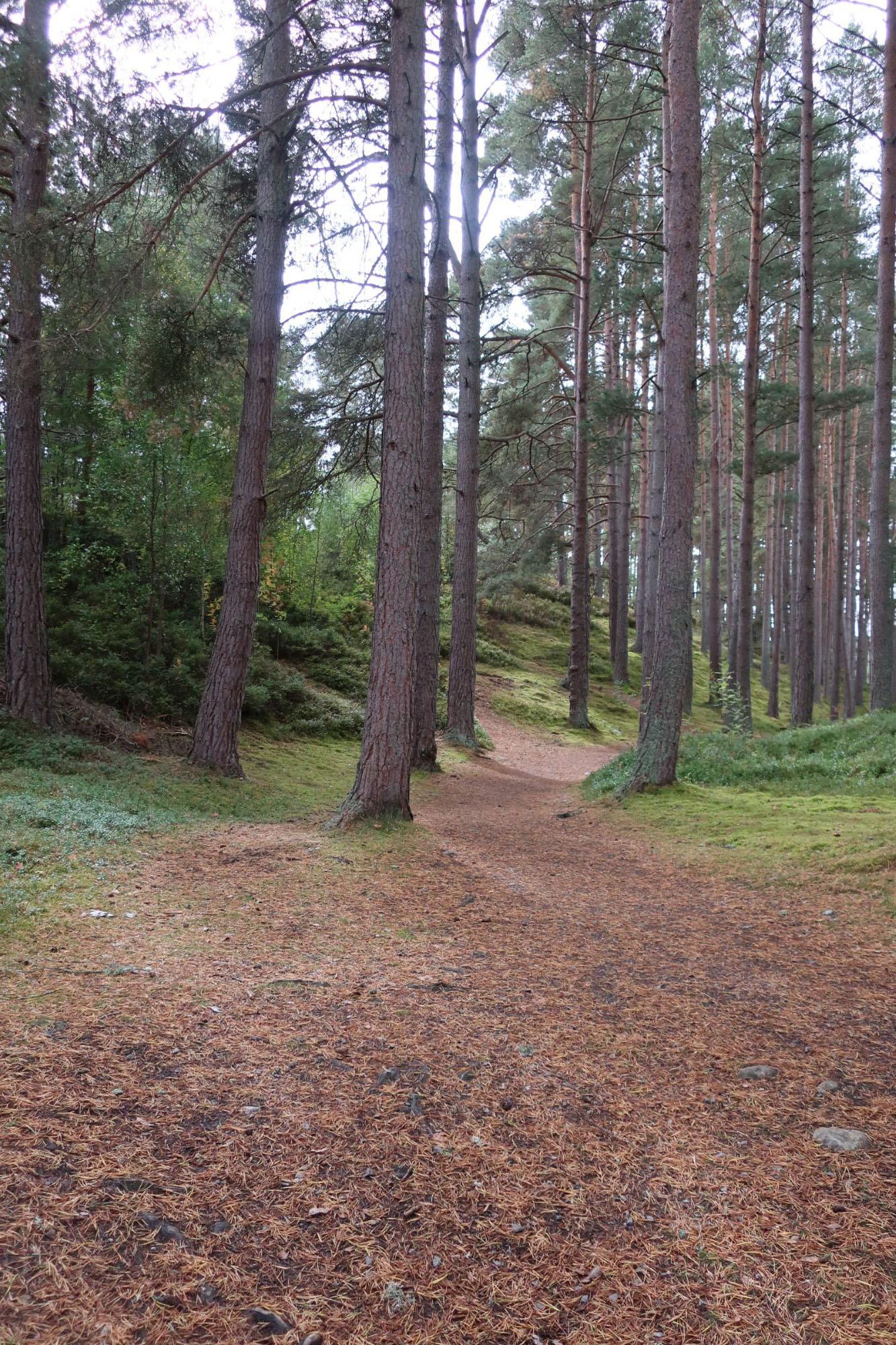 Path at Highland Folk Museum