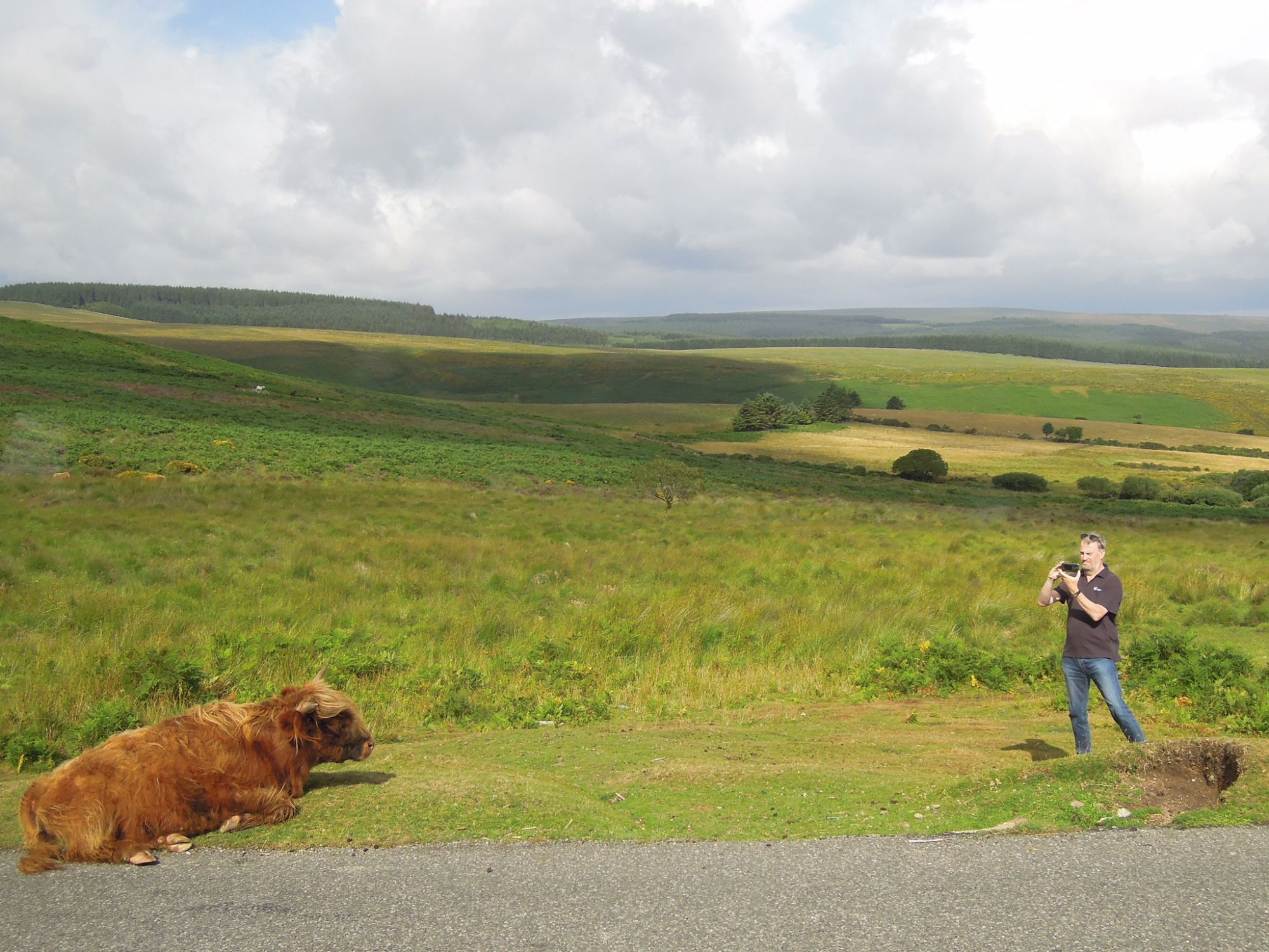 Our Tour Guide  The Coo Cow