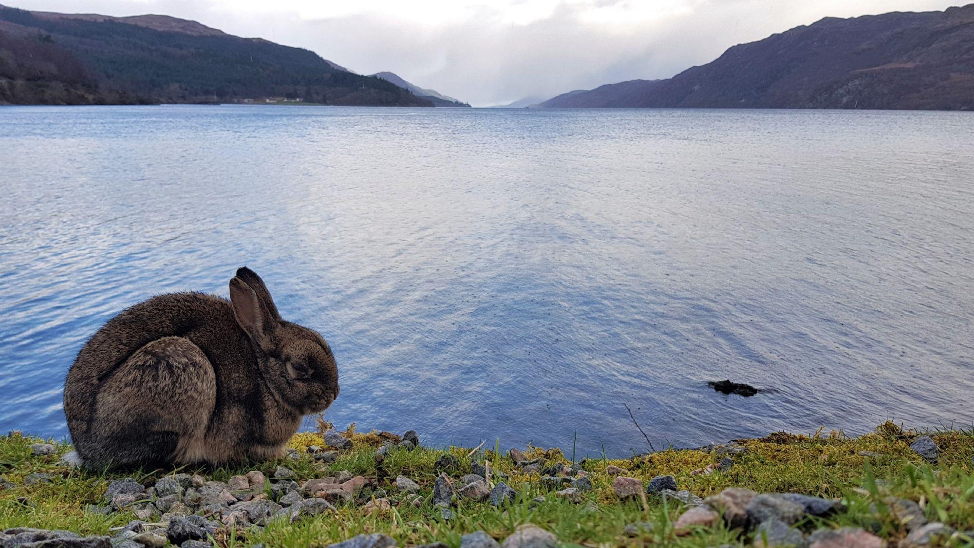 Loch Ness rabbit