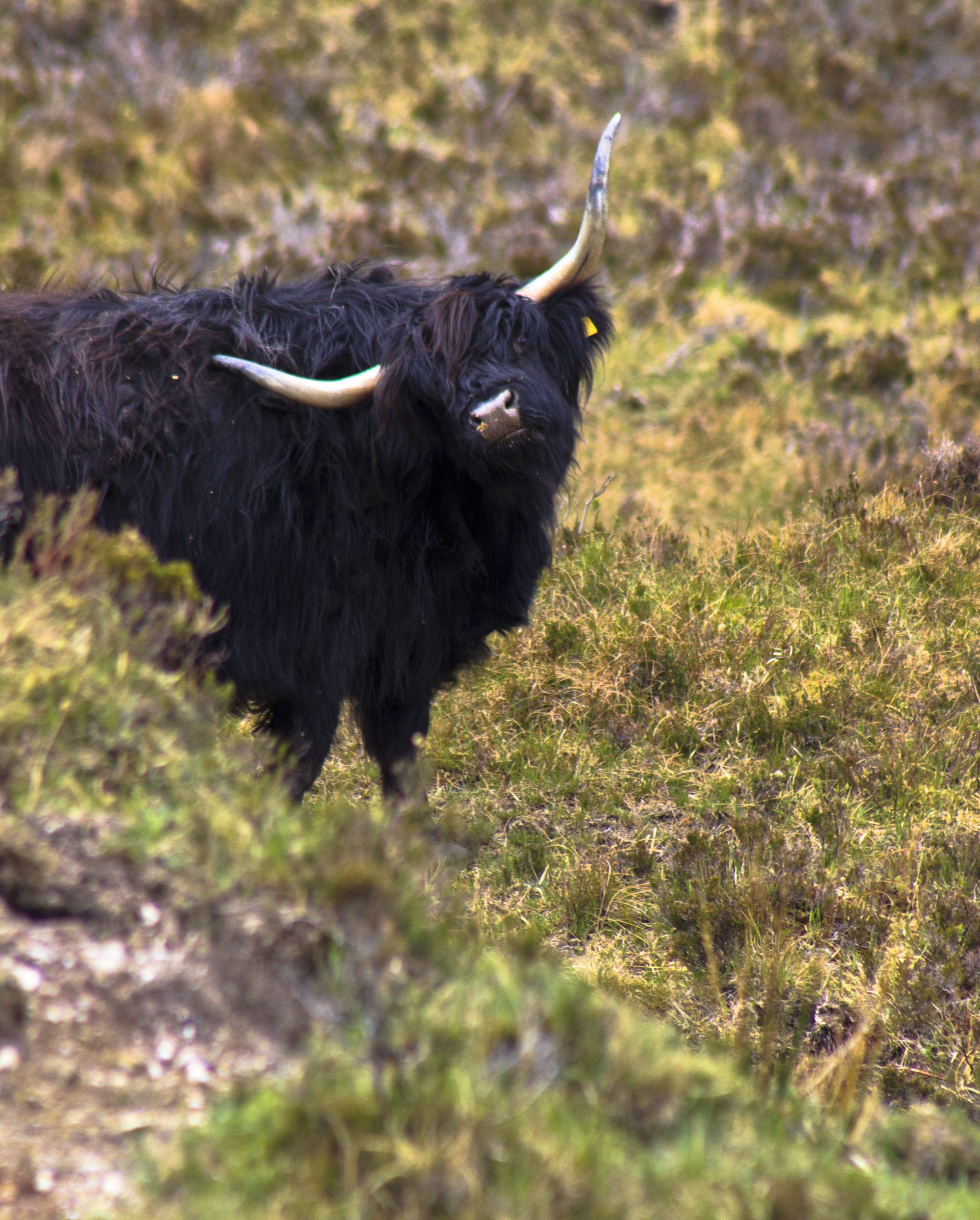 ...and a coo or two!