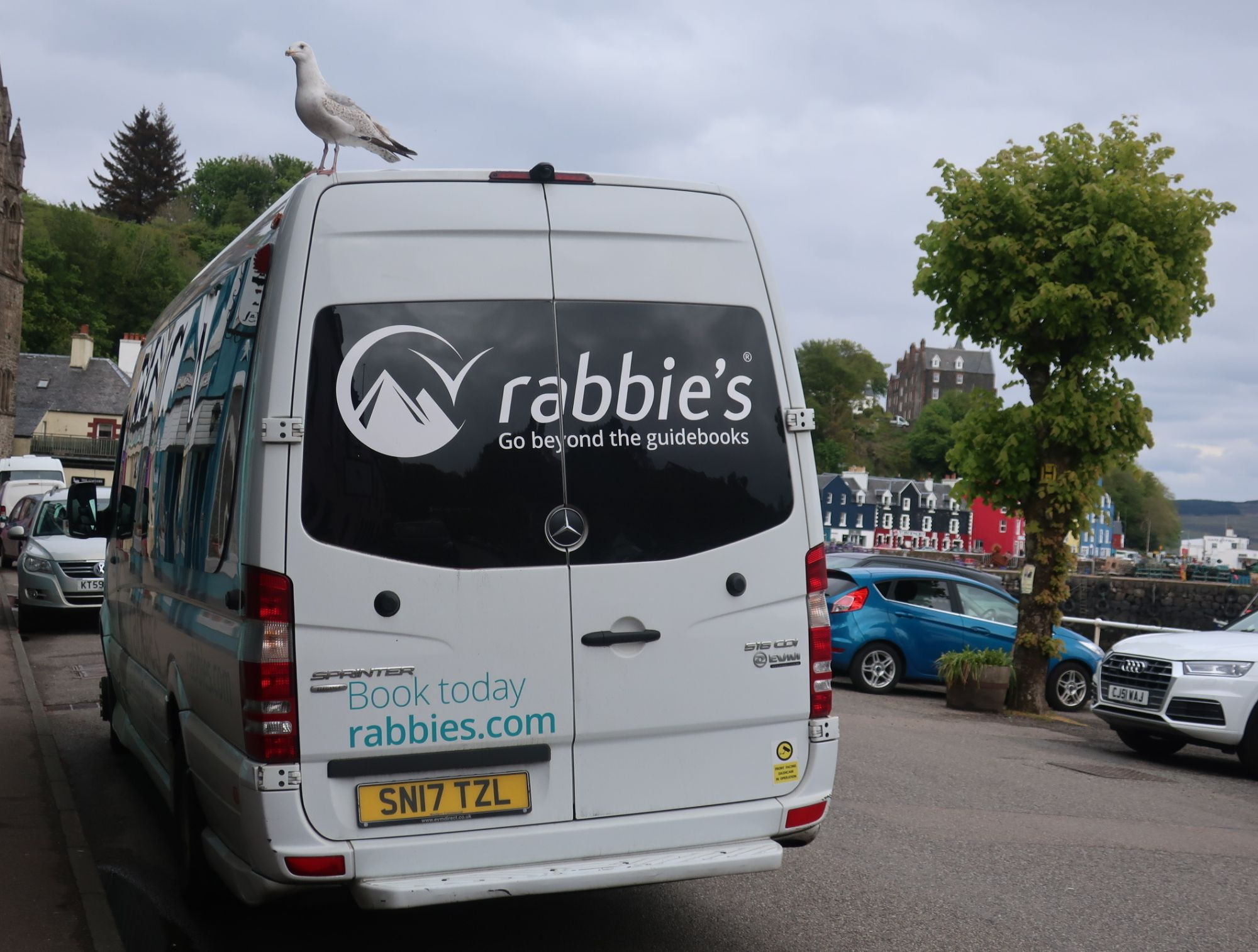 Even seagulls to Rabbies