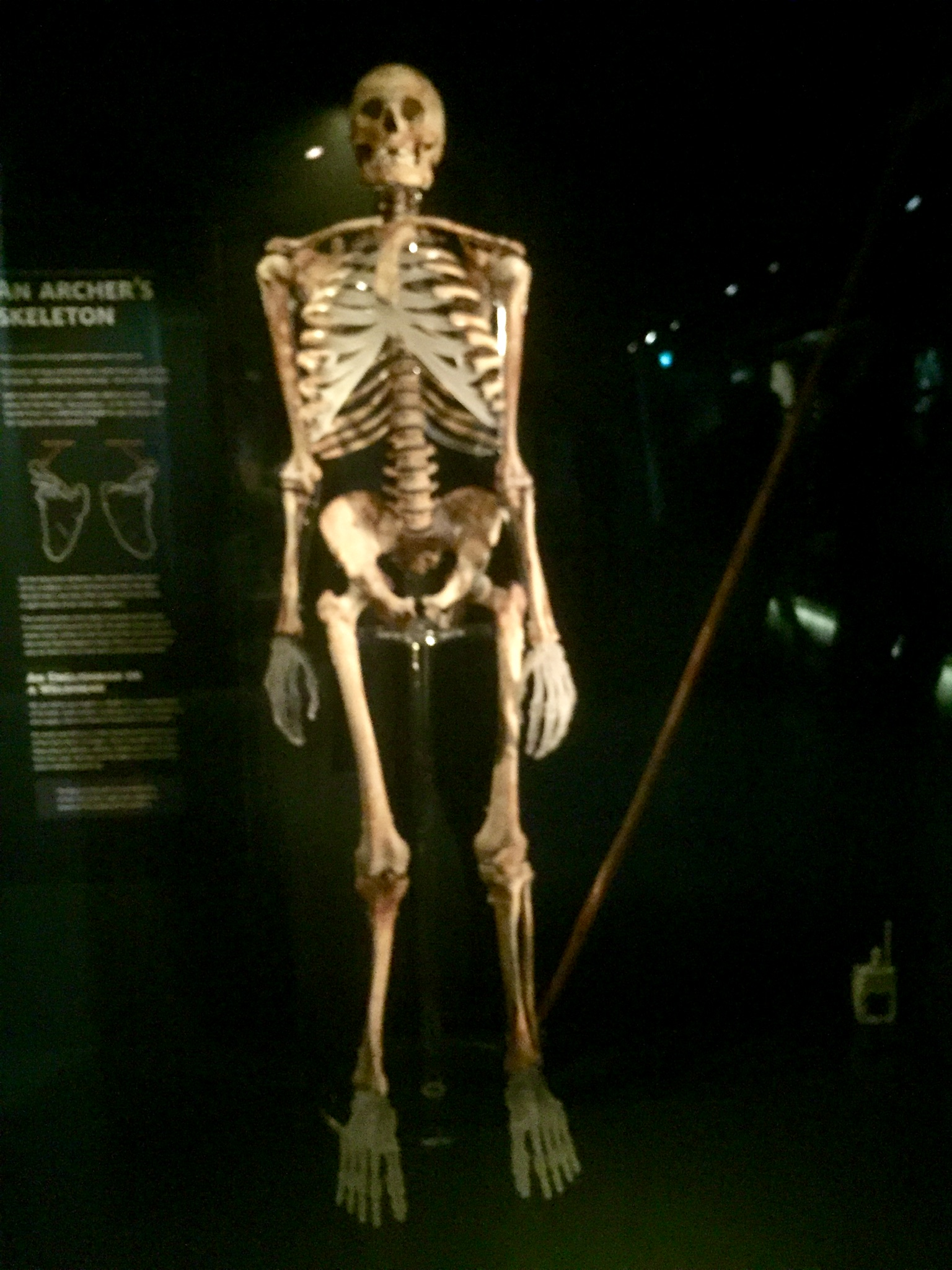 Archer at the Mary Rose Museum