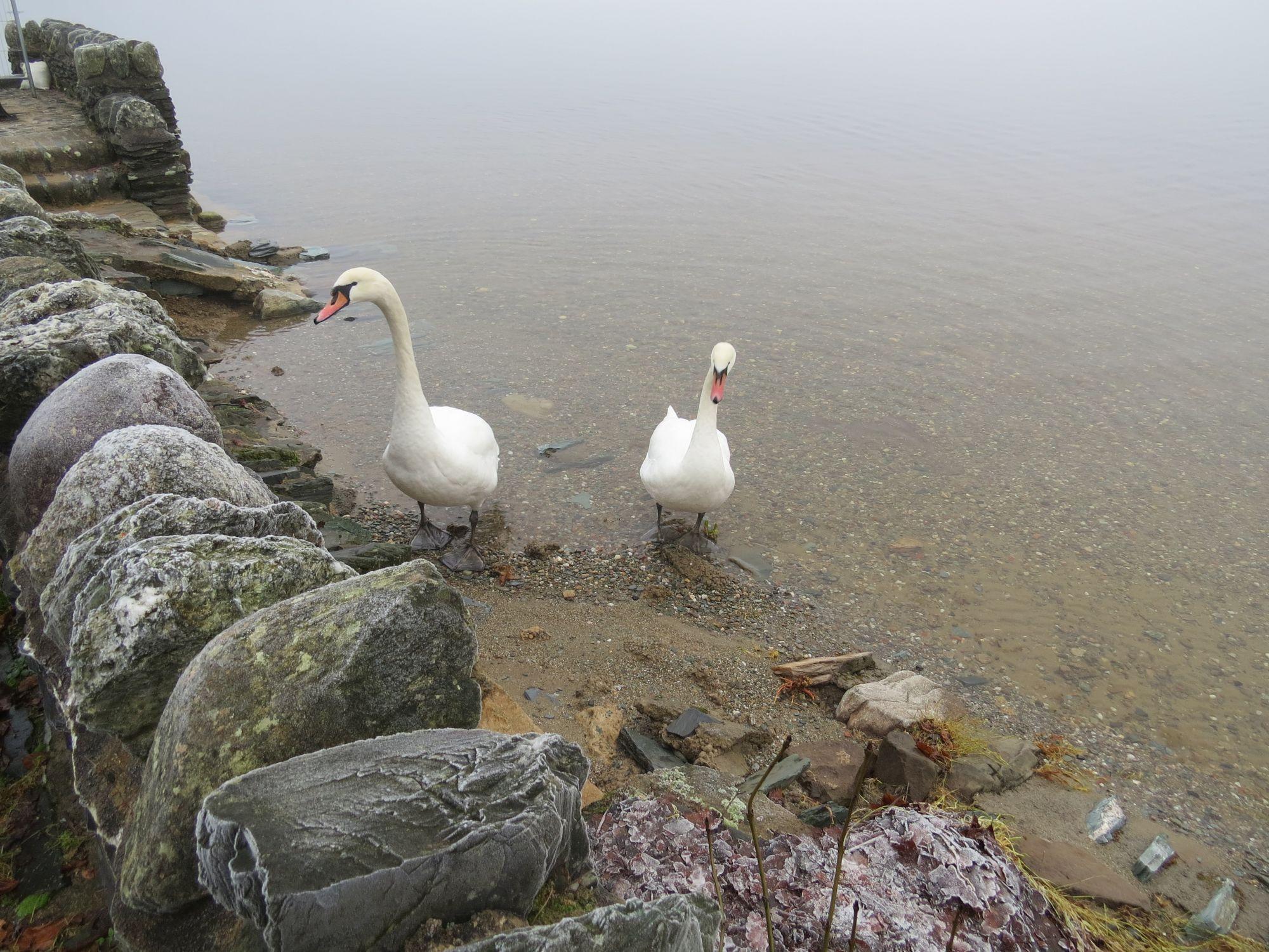 Loch Lomond - Luss