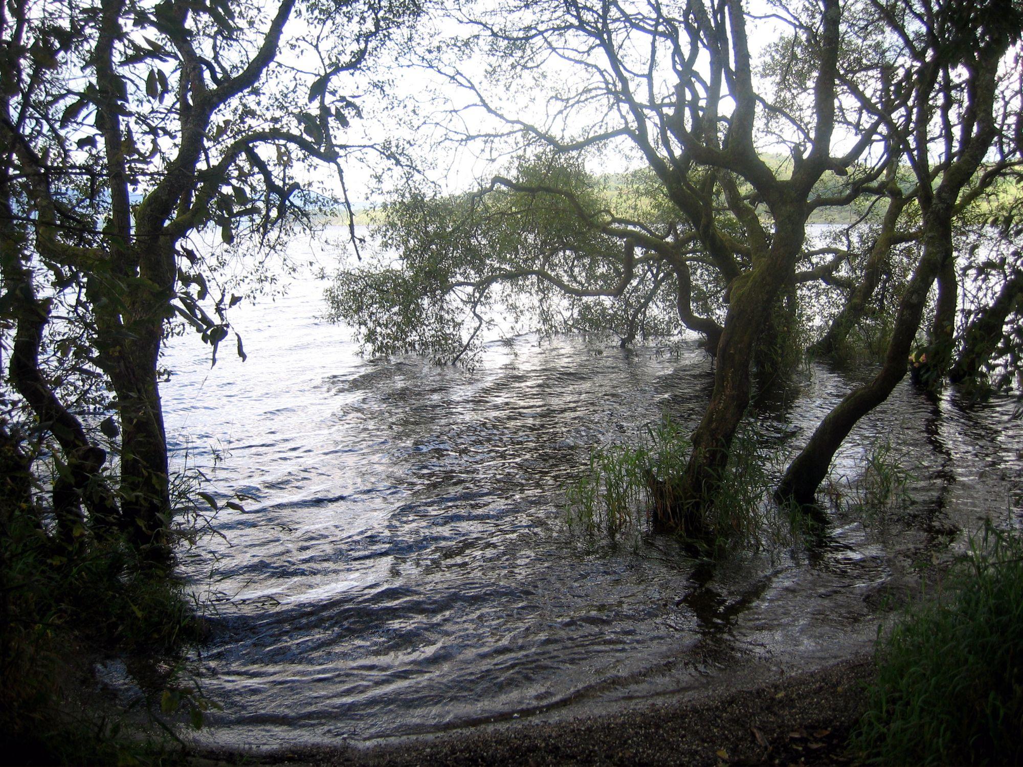 bonnie banks (Loch Lomond)