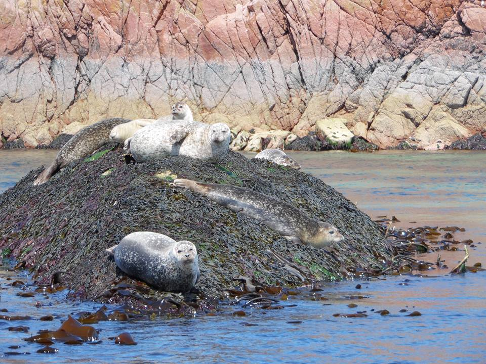 Seals on route to Staffa